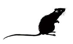 Silueta de una Rata